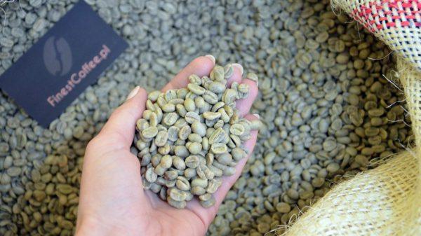 palarnia kawy zielona kawa