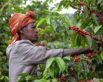 Fair Trade – kawa ze sprawiedliwego handlu